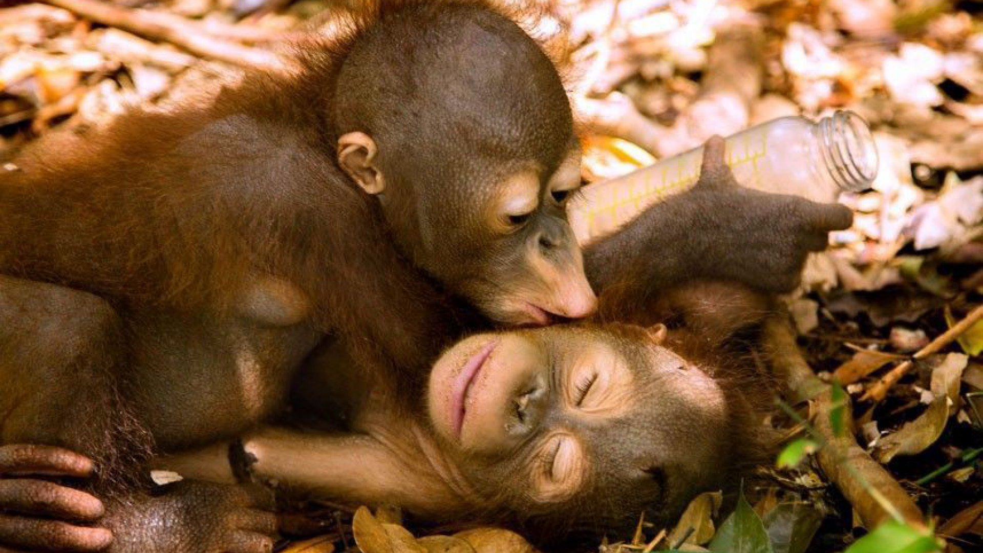 Girl sex monkey sex pic monkey hentia pictures