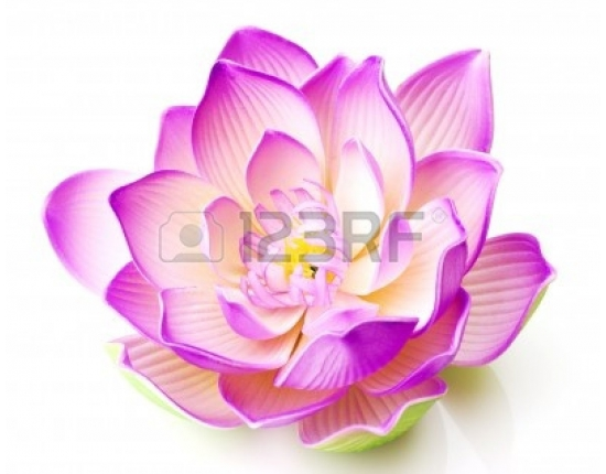 Photo lotus flower free 3