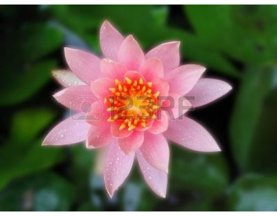 Photo lotus flower free 5